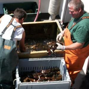 Reversing Falls Lobster Harpswell Maine