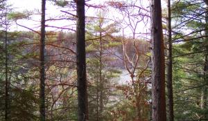 Landscape Trees